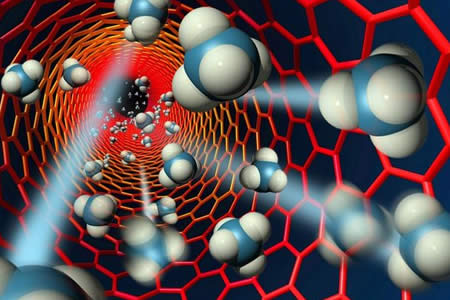 Científicos checos regeneran por primera vez el timo con nanotecnología