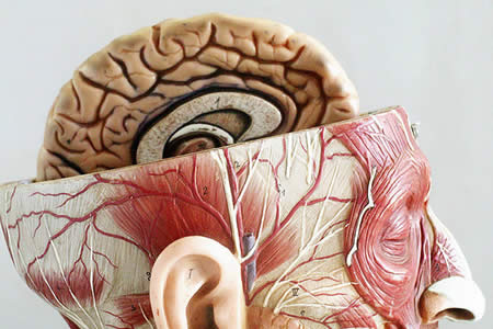 Las lesiones cerebrales podrían activar el fundamentalismo religioso