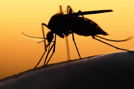 Confirman dos casos de zika en Paraguay, uno en una embarazada
