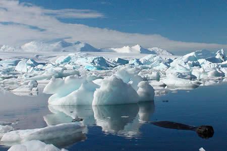 La Antártida ha sufrido un profundo cambio ecológico en los últimos 50 años
