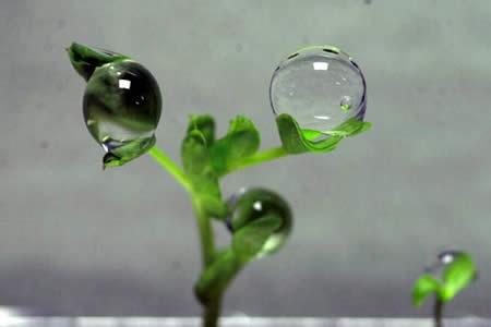 ¿Plantas sin gravedad?