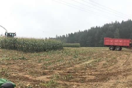 ¡Menuda sorpresa escondida entre el maíz!