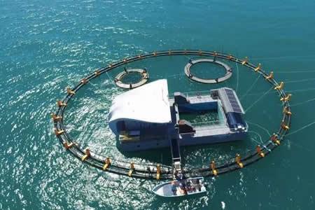 Gobierno de México alista el acuario para las vaquitas marinas rescatadas