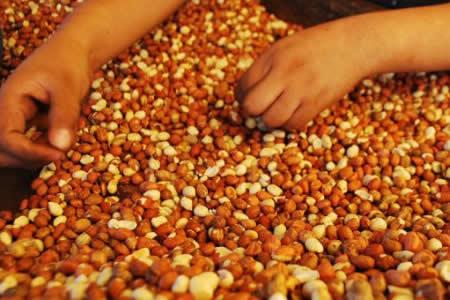 Exportaciones de maní boliviano crecieron 18% en el primer semestre de este año
