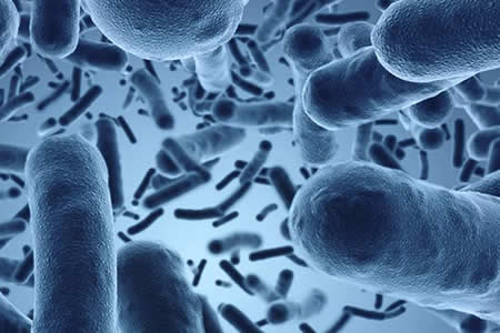 Microbios intestinales pueden influir en desarrollo de esclerosis múltiple
