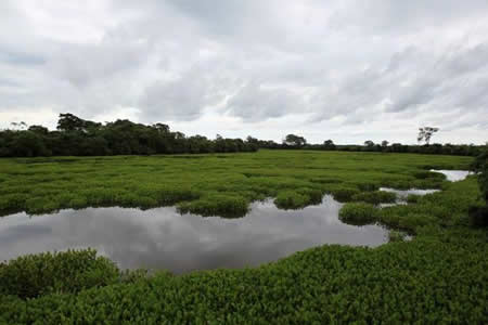 La Amazonía, Pantanal y Cerrado en Brasil, juntos en un mismo viaje