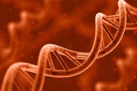 Un estudio genético arroja luz sobre el papel del azar en la evolución
