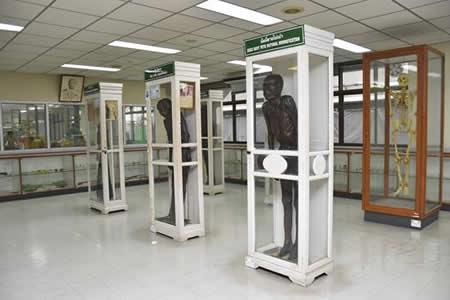 El horror, método científico en el museo forense de Bangkok