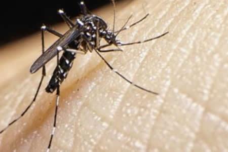 Detectan mutación genética del zika que le permite causar microcefalia fetal