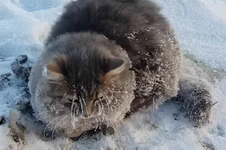 Rescatan en Rusia a un gato que estuvo a punto de morir atascado en el hielo