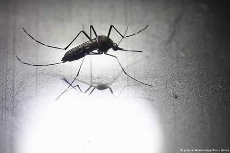 """Zika: """"Eliminar criaderos innecesarios"""""""
