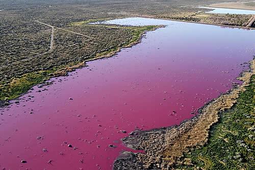 Una laguna se tiñe de rosa en Argentina debido a la contaminación por el vertido de residuos de empresas pesqueras
