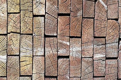 Hallan la estructura de madera más antigua de Europa