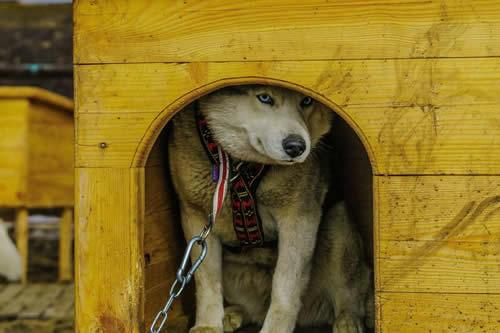 Noruega investiga muerte de 26 perros por un mal desconocido