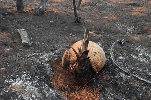 """Experto de Roboré: """"Ha muerto el 80% de toda la fauna"""", es un desastre catastrófico"""