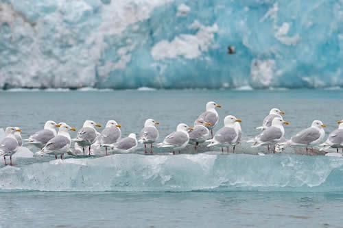 El calentamiento global impide a las plantas y animales del Ártico reproducirse con normalidad