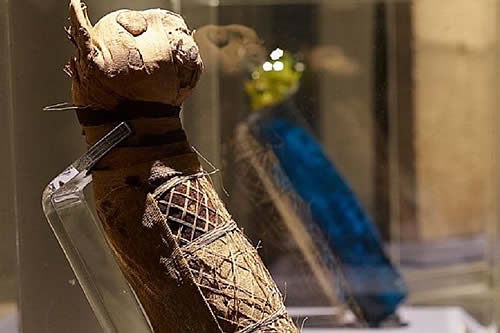Científicos descubren algo inesperado y asombroso en una momia felina egipcia