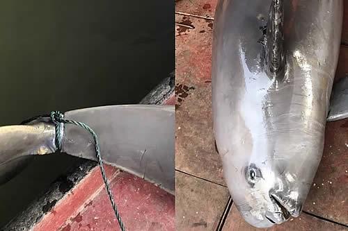 Dejan morir cruelmente a un cetáceo en peligro de extinción atándole unos ladrillos en un lago de China