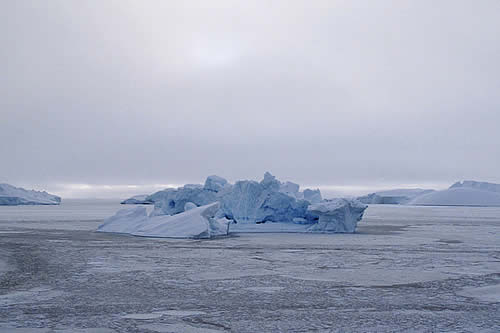Derretimiento del Ártico permite la propagación de un virus mortal que amenaza a los mamíferos marinos