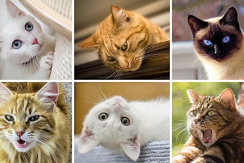 Un estudio comprueba que se pueden descifrar las expresiones faciales de los gatos