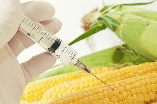 Arce abroga decretos que autorizaban uso de semillas transgénicas en cinco cultivos