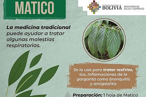 Salud crea aplicación digital de protocolos sobre cómo utilizar las plantas medicinales
