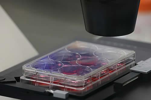 Epidemiólogo jefe de EE.UU. asegura que es más probable que el origen del covid-19 sea natural