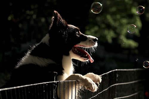 ¿Qué tan inteligente es su perro?: un grupo de canes 'genios' sorprende a los científicos con sus excepcionales capacidades de aprendizaje