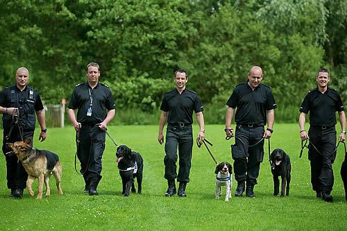 Perros policías: la verdad detrás de su olfato