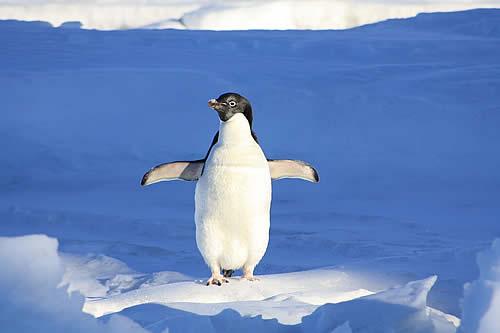 Hallan microplásticos en el organismo de pingüinos de la Antártida