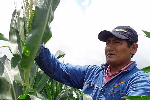 Emapa y productores fijan precios del maíz amarillo para la campaña de verano