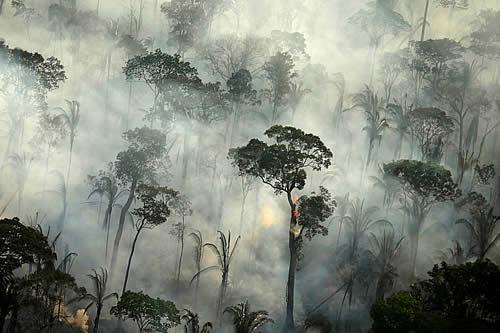 La selva amazónica emitió más dióxido de carbono del que absorbió durante la última década