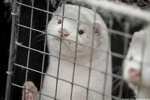 Israel es el primer país que prohíbe el comercio de pieles de animales para la moda
