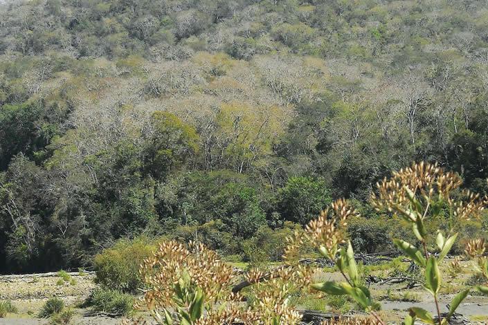 Bosque Seco de Asariamas