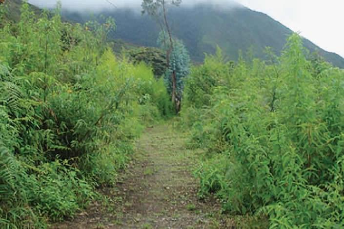 Camino Precolombino Macha