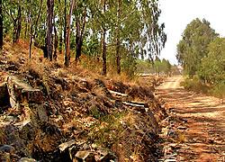 Senda Ecológica - Parque Tunari