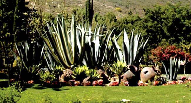 Jardin bot nico cochabamba bolivia gu a de turismo de for Jardin botanico medicinal
